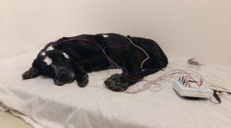Kutyák és emberek alvásfüggő tanulási mechanizmusa
