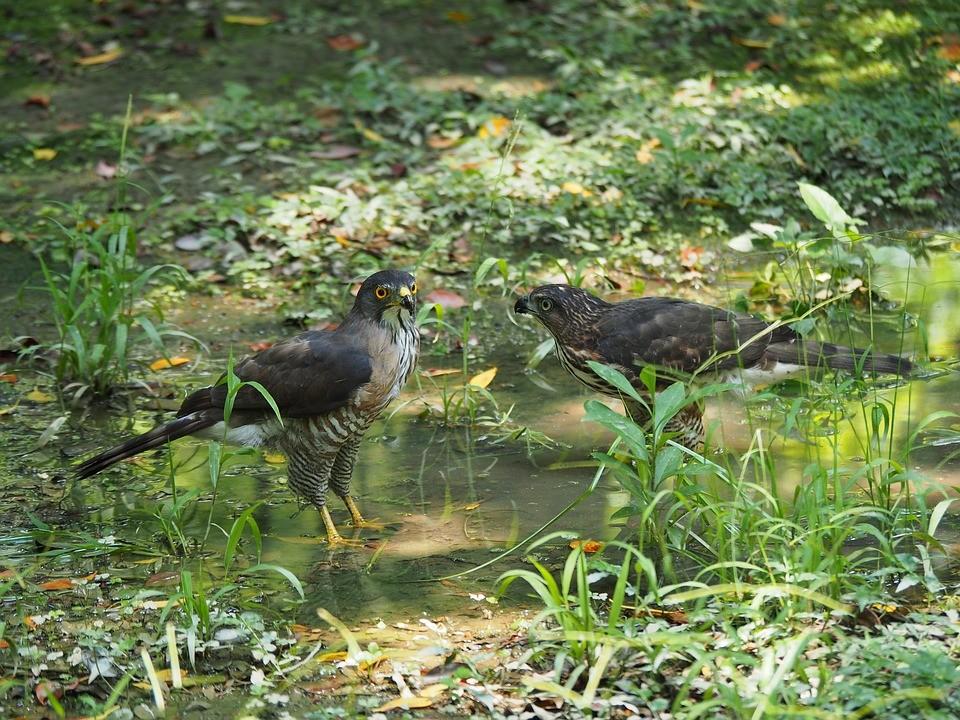 Az idei év madara a vándorsólyom - TUDOMÁNYPLÁZA