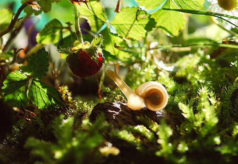 A növények felkészülnek az őket ért támadásokra