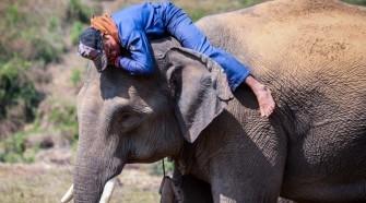 Az ázsiai elefántoknak különböző személyiségjegyei vannak 1