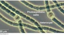 A bakteriális sokféleség a vártnál is nagyobb - TUDOMÁNYPLÁZA