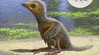 127 millió éves madárfióka világítja meg a madarak evolúcióját