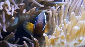 Szimbiózis - Meghökkentő kapcsolatok az állatvilágban