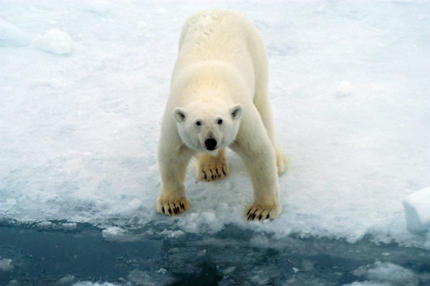 National Geographic és a globális felmelegedés
