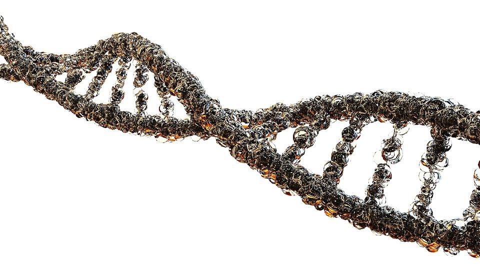 Webszerverrel a gének nyomában - TUDOMÁNYPLÁZA