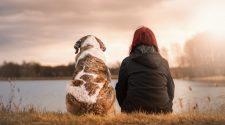Sokkal több a kutyák és ember közötti hasonlóság -