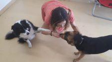 A kutyák is féltékenyek? - TUDOMÁNYPLÁZA - Élővilág