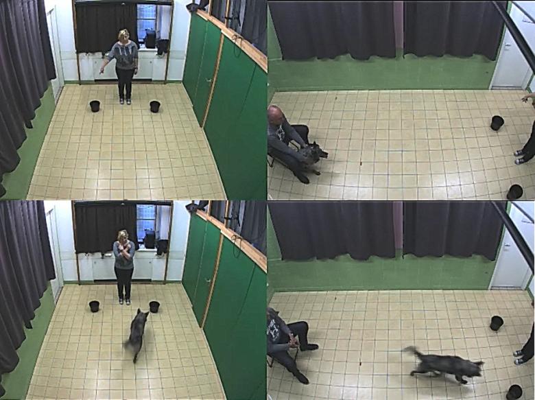 elhízott kutyák viselkedése