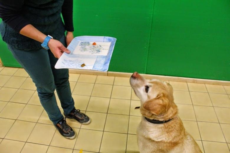 Az ELTE Etológia Tanszékének és a Padovai Egyetemnek a kutatói azt állapították meg, hogy az elhízott kutyák viselkedése hasonlóságot mutat a túlsúlyos emberek egyes személyiségjegyeivel.
