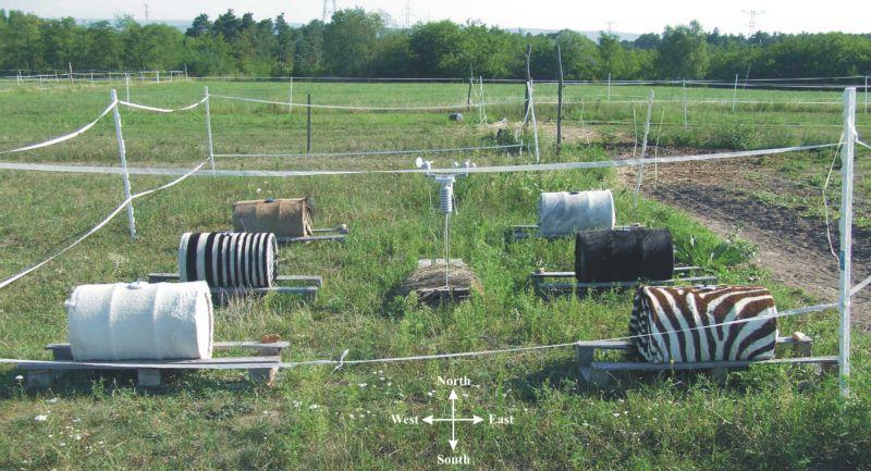 2016 és 2017 nyarán egy gödi lovas tanyán folytatott több hónapos terepkísérletben (1. ábra) Horváth Gábor és kutatócsoportja vizsgálta lovak, szarvasmarhák és zebrák testének termodinamikai modelljeit: 60 literes, vízzel töltött fémhordókat vontak be fekete, fehér és szürke lovak és szarvasmarhák kikészített bőrével, valamint egy-egy mesterséges (fekete és fehér marhabőrcsíkokból összevart) csíkos és valódi zebrabőrrel. Zebracsíkok