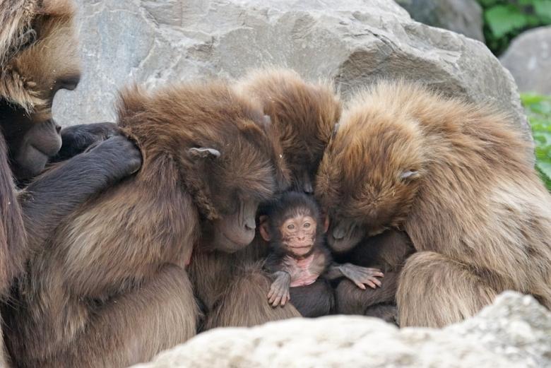 Veszélyeztetett főemlősök és emlősök az ember miatt- TUDOMÁNYPLÁZA