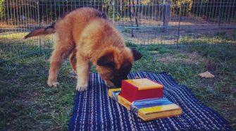 A kiskutyák tanulása - TUDOMÁNYPLÁZA - Élővilág