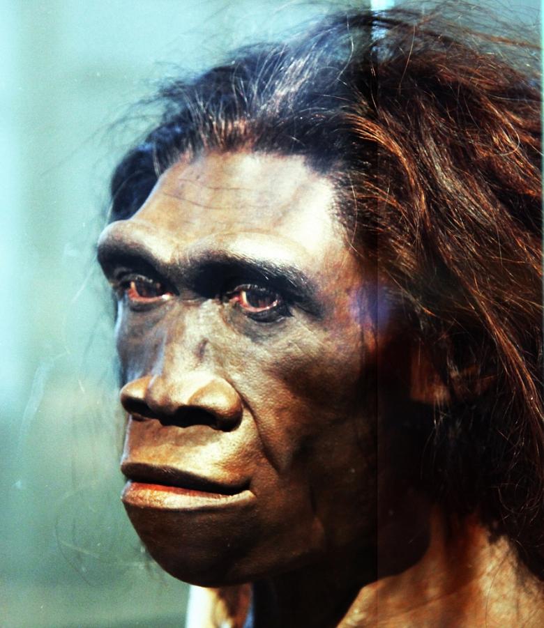 Lustaság és maradiság vezetett a Homo erectus kihalásához
