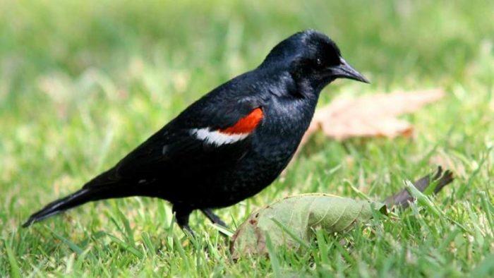 Hogyan kódoljuk a madarak titkos nyelvét? - csiröge