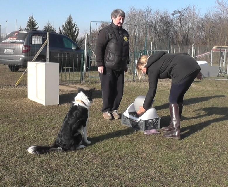 A kutyák célirányos cselekvése - TUDOMÁNYPLÁZA