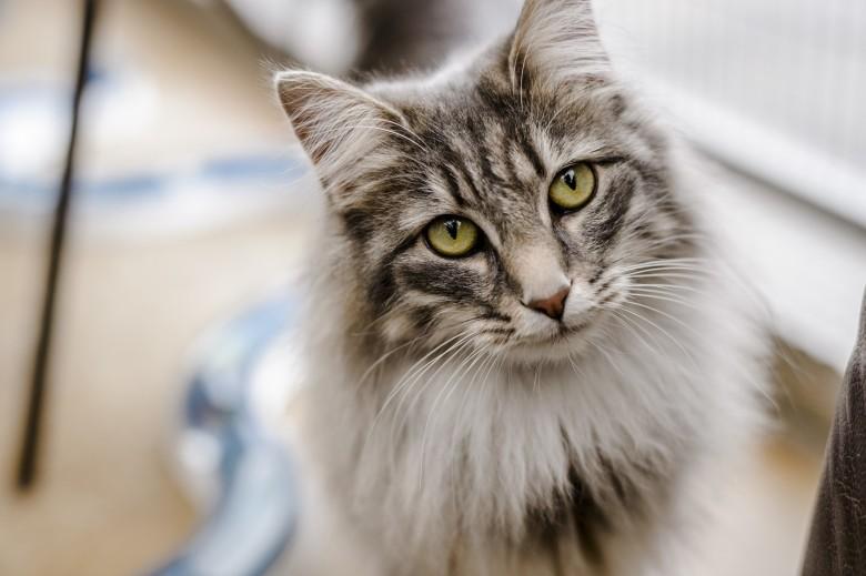 Macska és ember kapcsolata - TUDOMÁNYPLÁZA