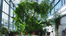 A Pécsi Tudományegyetem Botanikus Kertjének üvegházai trópusi hangulattal várják az érdeklődőket. Pécsi pálmaház