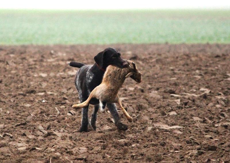 Kutya és vadászat