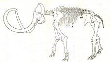 """Láthatók lesznek a """"pécsi mamut"""" maradványai"""