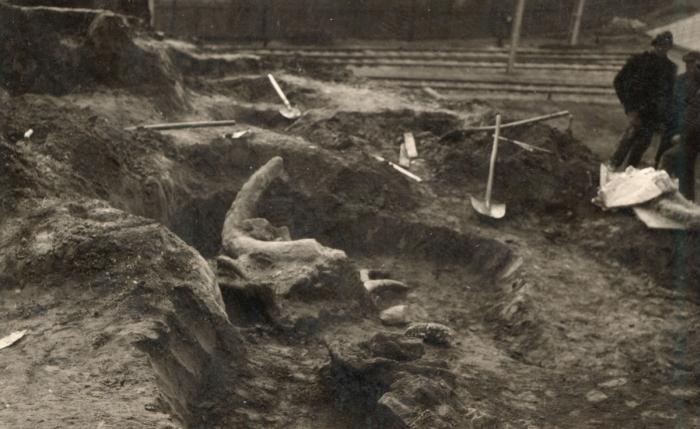 """""""pécsi mamut"""" maradványainak ásatása"""