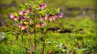 Erőfeszítések a veszélyeztetett növények érdekében