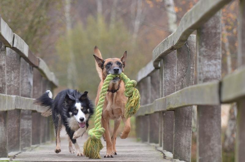 Az idős kutyák általában dominánsak a fiatalok felett, ezt a mostani tanulmány is megerősítette.