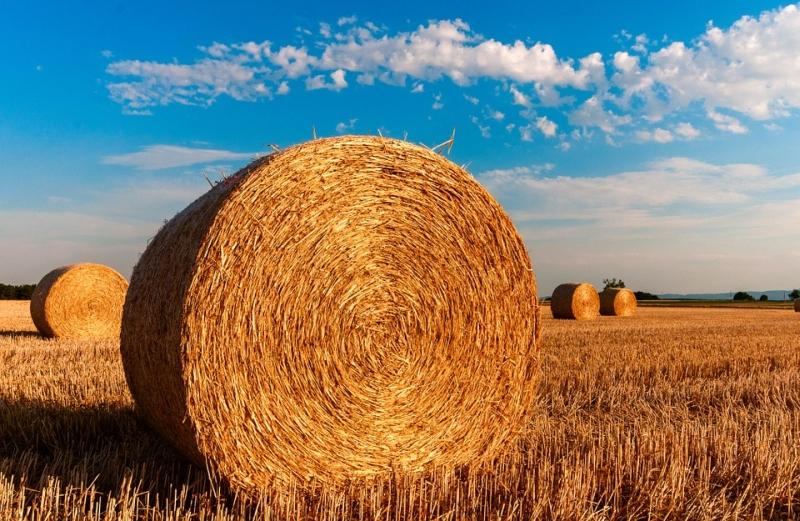 12 milliárd forintos zöld fejlesztéssel szalmából készül majd a jövő papírzsebkendője.