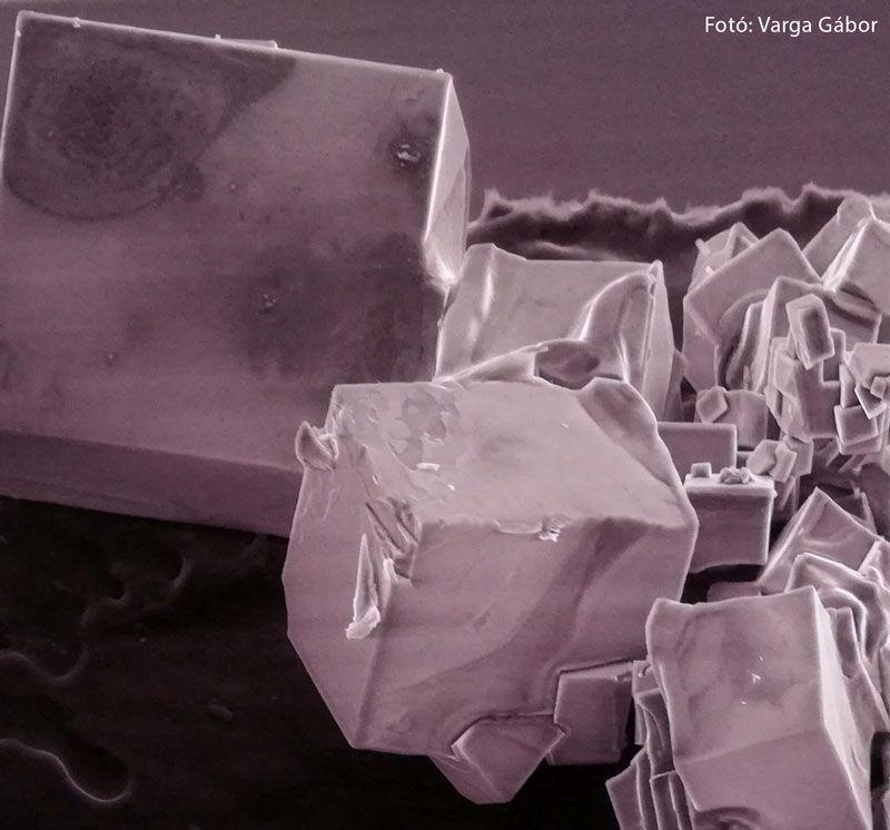 konyhasó - Mikrovilág kiállítás – az élet kicsiben