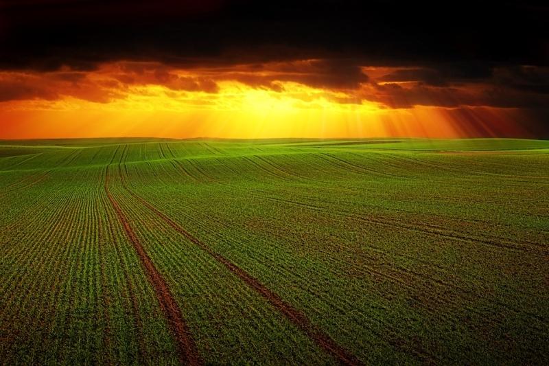 A felelős mezőgazdasági szereplők szerint a talaj, azaz a föld termékenysége nagyon fontos kérdés.