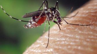 Szúnyogok - nyári ellenségeink