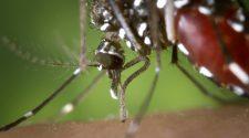 A szúnyogok és mi, problémák és megoldások