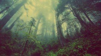 Plusz 1 milliárd hektárnyi erdő enyhíthetné a globális felmelegedést