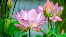 Veszélyesek lehetnek a külföldről behozott növények