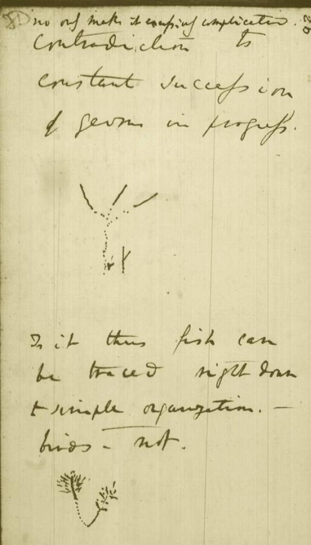 Charles Darwin ábravázlata az élet koralljáról (B jegyzetfüzet, 1837–1838)Fotó: Wikimedia Commons