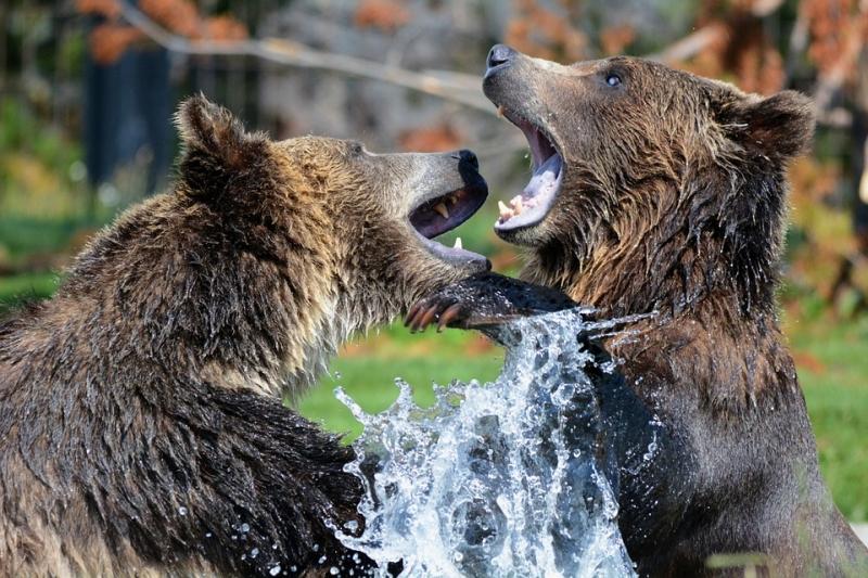Amerika lazít a veszélyeztetett fajok védelmén