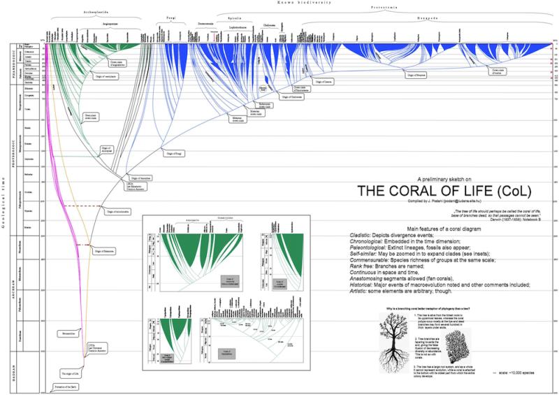 Az élet korallja prototípusa. Az ábra Microsoft Powerpoint felhasználásával készült egy kézzel rajzolt változat nyomán.
