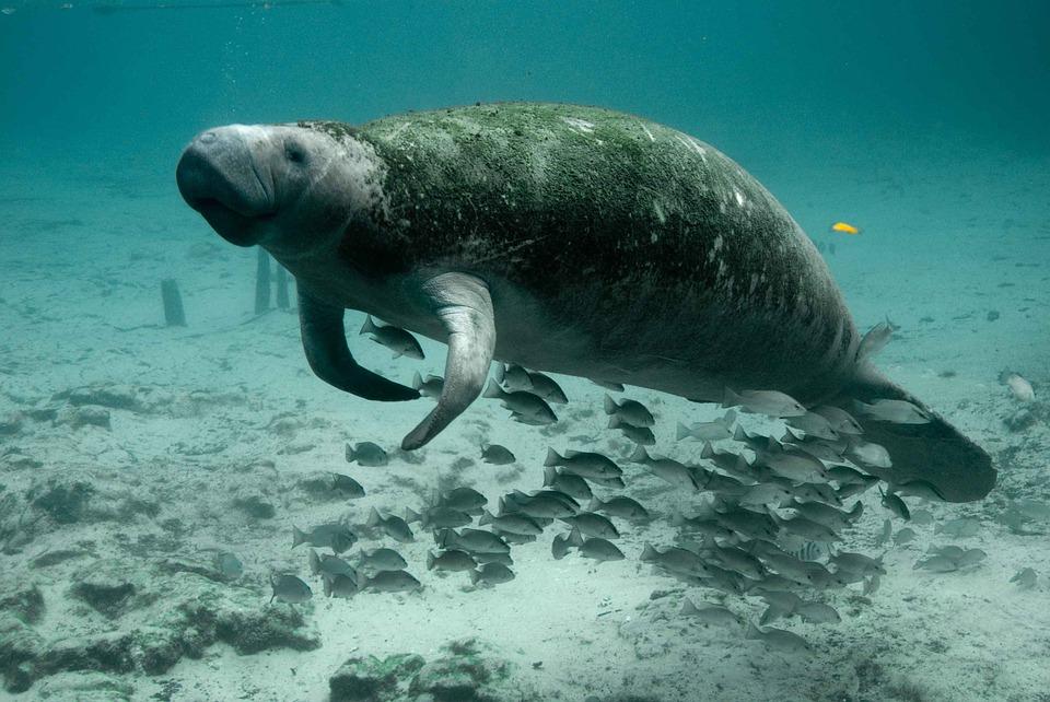 Szakértők e törvény áldásos hatásának tudják be, hogy például nem tűntek el végleg a hosszúszárnyú bálnák, a Tennessee államban honos bíborszínű kasvirágok, vagy a floridai manátuszok (tengeri tehenek).