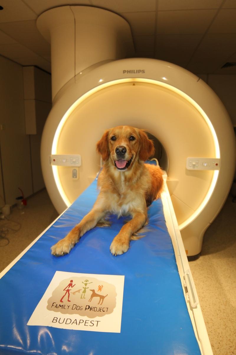 A hálózatokat funkcionális mágneses rezonancia (fMRI) vizsgálattal fedezték fel, amihez családi kutyákat képeztek ki mozdulatlan fekvésre az MR vizsgáló csőben.