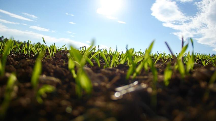 Hogyan legyen zöld a fű?