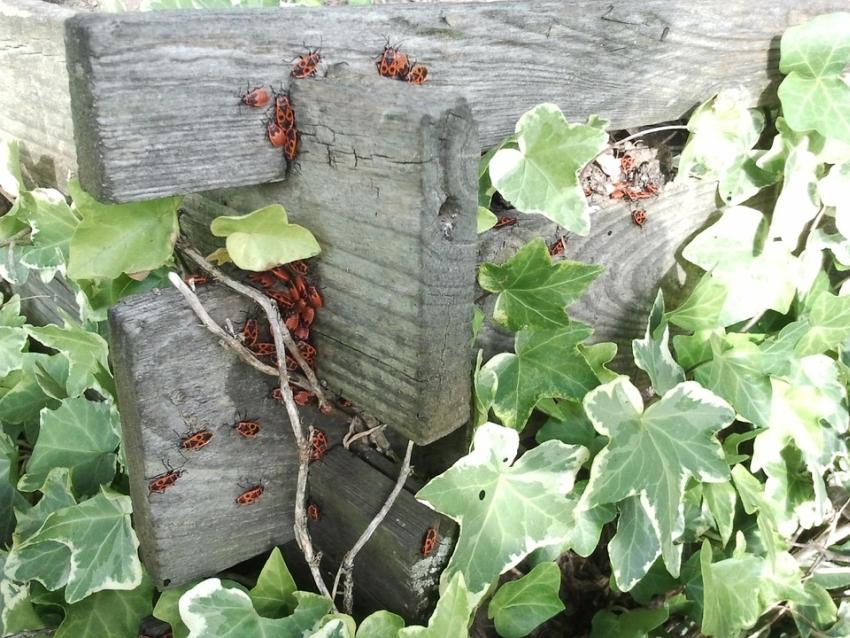 Használja fel újra a kerti és az élelmiszer-hulladékot, szelektáljon, komposztáljon!