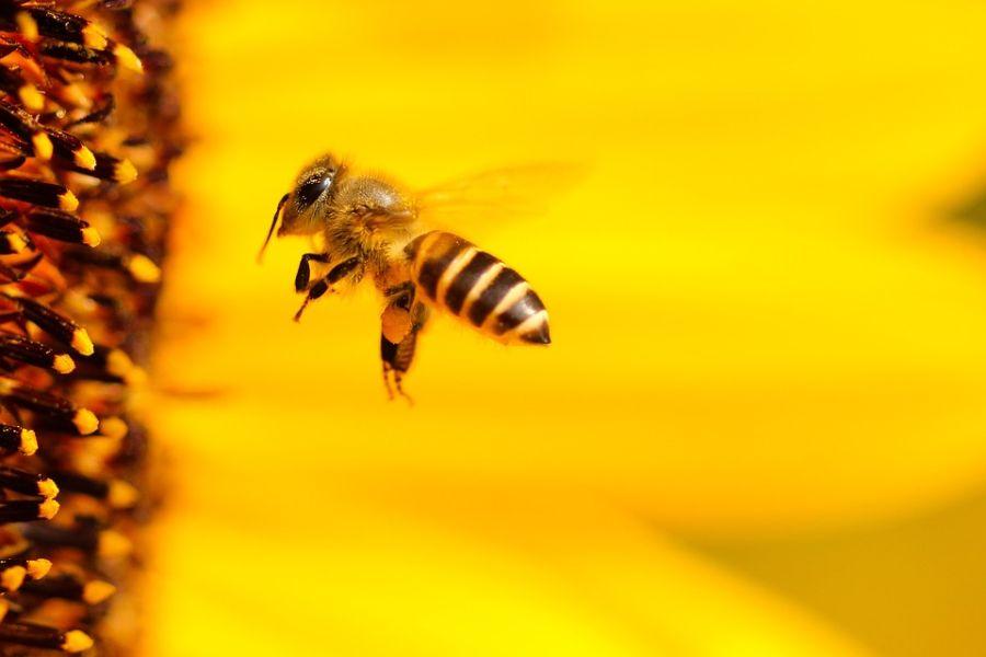 Több közelmúltbeli tanulmány is bizonyos rovarfajok, például a háziméh jelentős hanyatlásáról számolt be, különösen a fejlett gazdaságú országokban.