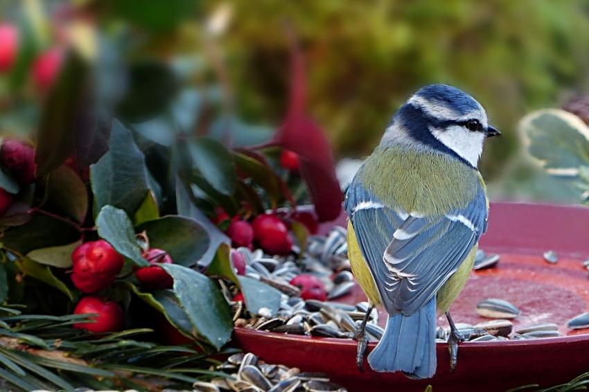 Legyen Önnek is madárbarát kertje!