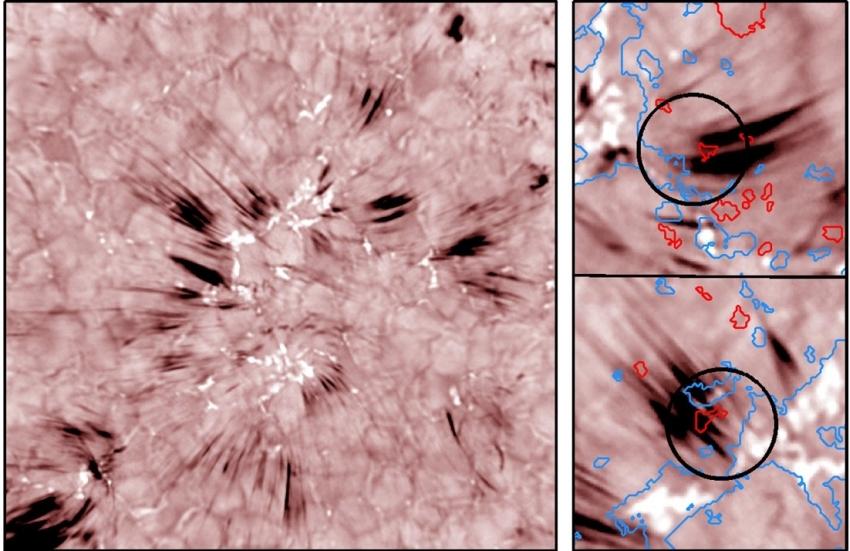 Balra: A sötét, hosszúkás alakzatok a Nap szpikulái, a hidrogen alfa vonalának kék tartományában. Jobbra: A szpikulák mágneses eredetének vizualizálása. A kék és vörös kontúrok ellentétes polaritású mágneses tereket körvonalaznak (Samanta és tsi., Science 2019). Adatforrás: BBSO-GST
