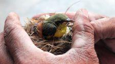 Február 5. - Tudunk-e még kommunikálni a természettel? -TudományPláza