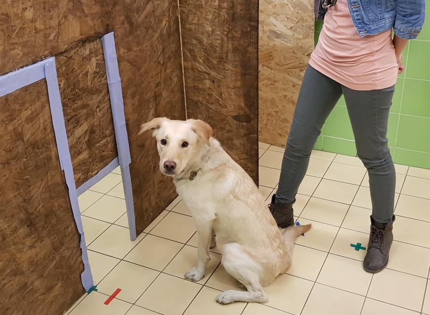 A kísérletben a kutyákat két térfélre osztott helyiségben tesztelték.
