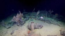 Mélytengeri korallkertek