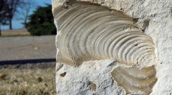 A napok fél órával rövidebbek voltak 70 millió éve