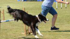 Segítő- és terápiás kutyák sikeresebben oldják meg a feladatokat