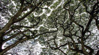 A lombkorona megvédi az erdő élőlényeit