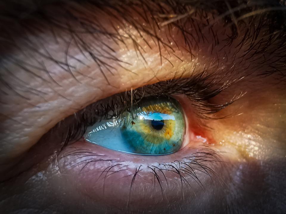 A kígyók hőlátó képessége segíthet a retina gyógyításában